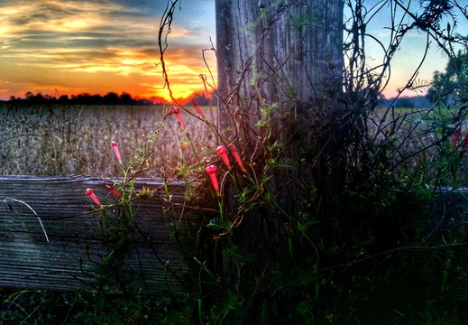 2015-10-28 Magnolia Springs Sunset