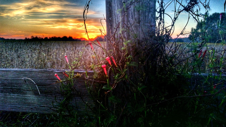 2015-10-28-Magnolia-Springs-Sunset.jpg